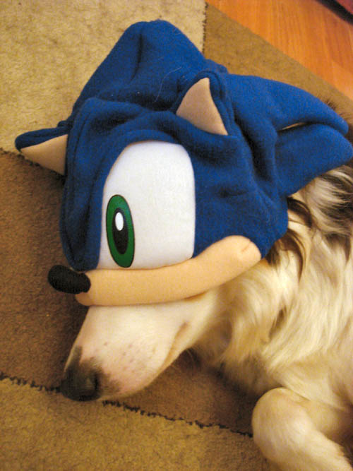 A dog in a Sonic hat
